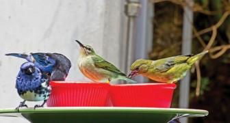 Vous voulez aider les oiseaux pendant l'hiver ? Voilà pourquoi vous ne devez JAMAIS lui donner du pain
