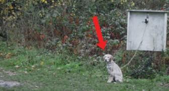 Een baby ontdekt een in de steek gelaten hond: op dat moment verandert alles!