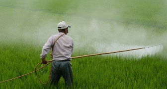 Pesticidi illegali ma comunque esportati: ecco il meccanismo che rende inutile qualsiasi legge
