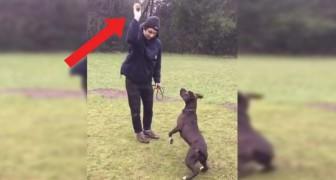 Il cane più sveglio del mondo: quello che riesce a fare dopo il lancio della palla non ha parole