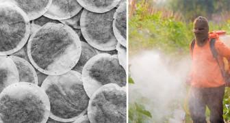 Sostanze tossiche nel tè: uno studio rivela le marche che contengono meno pesticidi