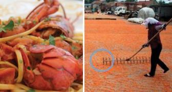 Crevettes colorées : voici les images inquiétantes de comment les crustacés sont rendus plus « appétissants »