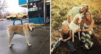 Er nähert sich einem vermeintlichen Straßenhund: Die Nachricht auf dem Schild entlockt ihm ein Lächeln