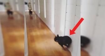 Suona il campanello: per questo bulldog la traversata del corridoio è piena di Pericoli