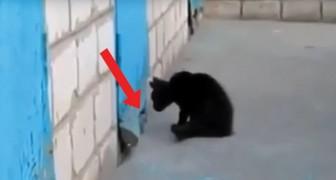 Un gattino scorge il muso di un cane segregato: ecco come un gioco si trasforma in un salvataggio