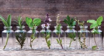 Les 10 herbes que vous pouvez faire pousser dans l'eau et garder à la maison pendant une année entière