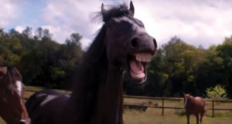 When even HORSES LAUGH you know you are in trouble!