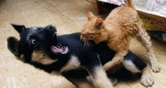 Perros asustados de los gatos
