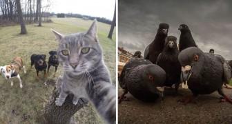 Des animaux en pose comme des groupes musicaux: les photos sont dignes d'une POCHETTE DE DISQUE