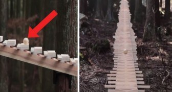 Experience this mesmerizing xylophone in the forest ...