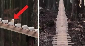 Uno xilofono gigante nella foresta: il suono che produce sarà la cosa più bella che sentirete oggi