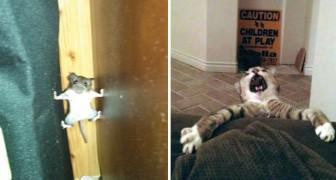 Voici une collection des «accidents» hilarants de nos amis les animaux