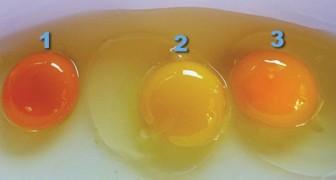 Die Farbe des Dotters verrät viel über das Ei, das wir essen wollen: So entdeckt ihr ob es frisch ist oder nicht