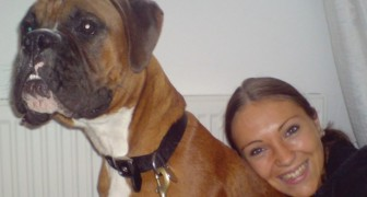 Una coppia inglese è riuscita a far clonare il proprio cane 12 giorni dopo la sua morte