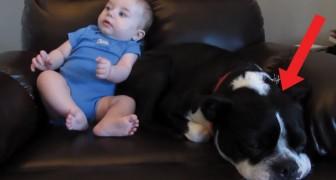 Das Kind macht gerade Aa: als der Hund dies bemerkt, denkt er nicht zweimal nach und...