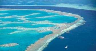 Le récif corallien a été déclaré MORT: et le pire c'est que nous continuons à ignorer le phénomène