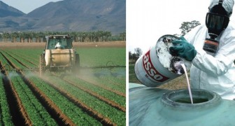 200.000 Tote durch Pestizide, aber die Menschen bevorzugen das Schöne vor dem Gesunden
