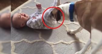 Il miglior baby sitter? Questo video dimostra che nessuno sa fare meglio dei nostri amici cani