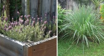 6 plantas que vão te ajudar a deixar as moscas bem longe!