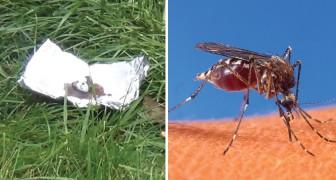 Éloignez les moustiques et les autres insectes avec ce répulsif fait maison efficace