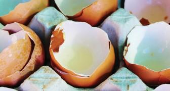 Usi le uova e getti via i gusci? Scopri tutti i loro usi e non farai mai più questo errore