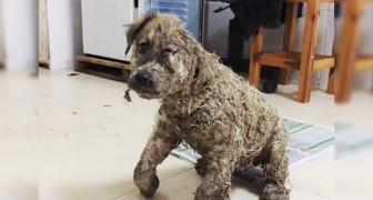 Ricoperto di colla e trascinato per metri da dei ragazzini: questo cucciolo rischiava di non farcela