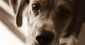 Nei negozi di animali solo cani e gatti RANDAGI: San Francisco dichiara guerra agli allevamenti