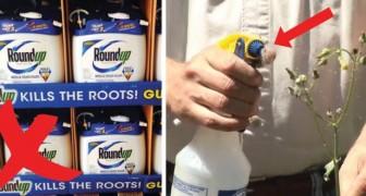 Weißer Essig im Garten: 6 Gründe, um sich von chemischen Mitteln zu verabschieden
