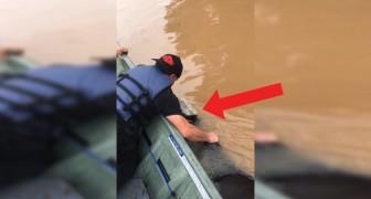 Ils naviguent 1 heure pour sauver une vache de l'inondation: l'arrivée sur la terre-ferme va vous émouvoir