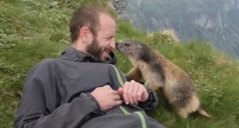 La marmotte surmonte sa timidité et offre à l'alpiniste un moment inoubliable