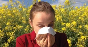 Allergia al polline? Ecco 10 miti da sfatare su questa malattia primaverile