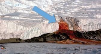 Après 100 ans, enfin révélé le mystère des « Cascades de sang »: voici ce qui se passe en Antarctique