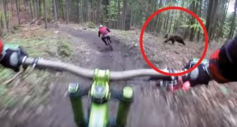 A frightful encounter on a bike trail! Check this out!