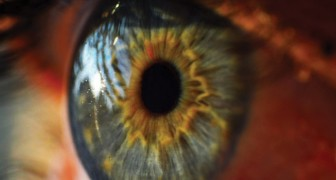 La prima retina artificiale organica è italiana e ridarà la vista a milioni di persone