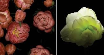 Questo timelapse montato in 3 anni di riprese mostra tutta la bellezza della primavera