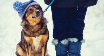 Pourquoi la mort de notre chien est parfois plus douloureuse que celle d'un ami?