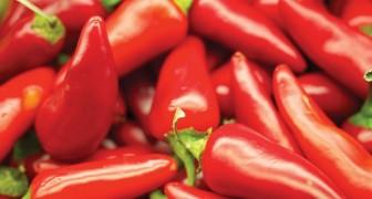 Il peperoncino allunga la vita: lo conferma uno studio americano
