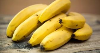 Bananen zijn juist de grootste vervuilers in de wereld, ze eten is lang niet het gezondste en duurzaamste dat je kunt doen.