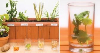 5 cose che potete facilmente coltivare in casa a partire dagli scarti del cibo
