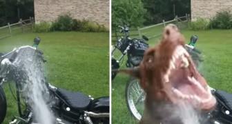 Un homme lave sa moto, mais la tâche se révèle plus difficile que prévu...