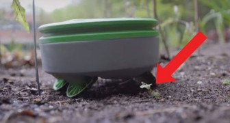 Now there is a gardening robot that eliminates weeds! Fantastic!