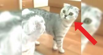 Assistete al momento in cui un gatto si rende conto di essere... Un gatto!