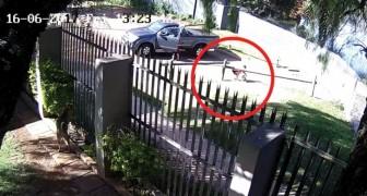 Le crudeli immagini dell'abbandono di un cane riprese alla telecamere di sicurezza
