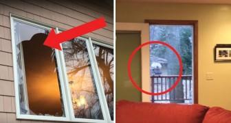Llegan a casa y encuentran un vidro roto: sacar afuera los intrusos no ha sido facil!