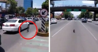 A dog escapes its owner's control and its wild run in the streets of the city is breathtaking!