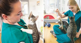 A.A.A. cercasi persona disposta a coccolare i gatti: la clinica veterinaria viene sommersa dai curricula