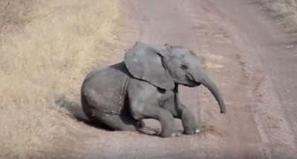 Der kleine Elefant tollt mitten auf der Straße herum, aber die Mutter reagiert...wie eine wahre Mutter!