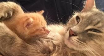 Eine deprimierte Katze, die ihre Kleinen verlor, findet ihr Glück bei einem kleinen Waisen-Kätzchen