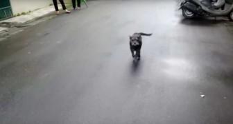 El perro se habia perdido desde hacia 6 dias: cuando la patrona lo encuentra su reaccion es muy tierna