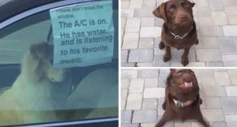 30 divertenti tweet sui cani in cui non potrete fare altro che riconoscervi